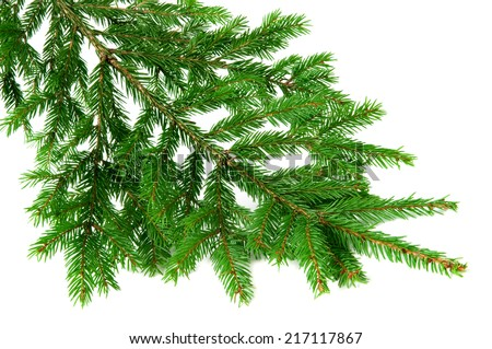 Green fir branch isolated on white background - stock photo