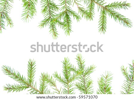 green fir branches with space for your text .white background - stock photo