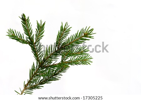 green fir tree twig isolated on white background - stock photo