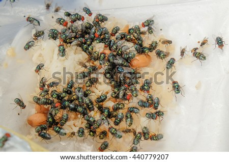 Green flies on food garbage. - stock photo