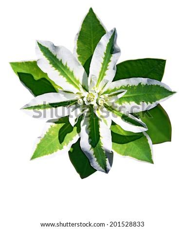 green flower - stock photo