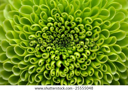Green flower close-up, abstract background - stock photo