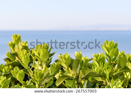 Green flowers and sea expressing pure nature suitable for background - stock photo