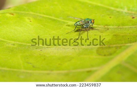 green fly on leaf - stock photo