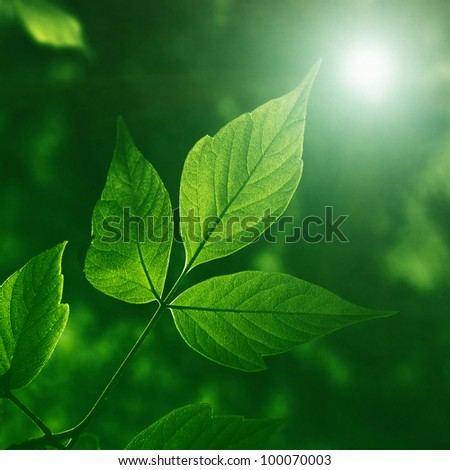 Green foliage at night. - stock photo