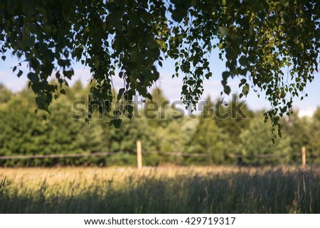 green foliage branch against forest, meadow and blue sky frame - stock photo