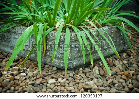 green foliage in an old stone pot on gravel - stock photo