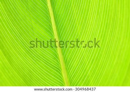 Green foliage pattern - stock photo