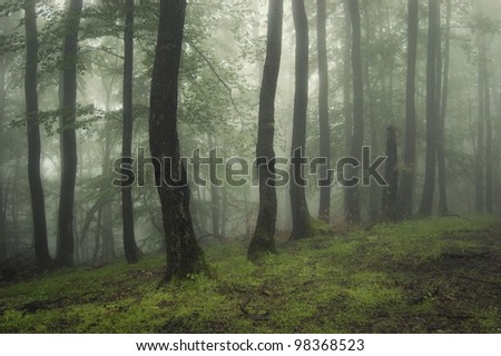 green forest after a summer rain - stock photo