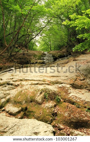 Green forest and river. - stock photo