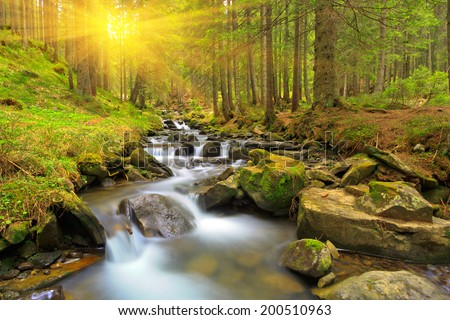 Green forest at spring time - stock photo