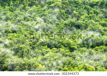 Green forest background and the mist. - stock photo