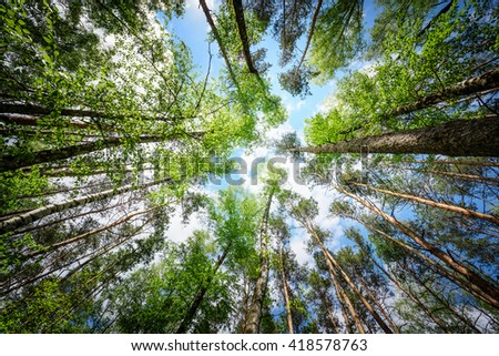 green forest background in a sunny day. - stock photo