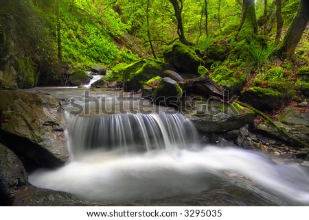Green forest by a river - stock photo