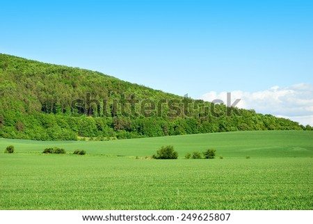Green forest hill with green field and blue sky - stock photo