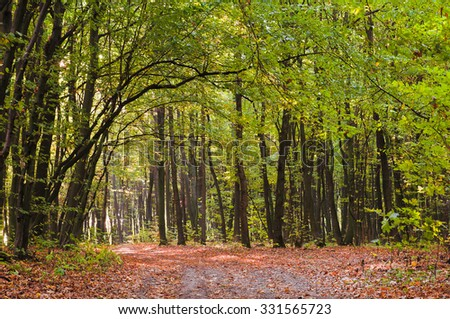 Green forest in autumn - stock photo
