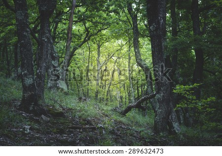 green forest light - stock photo