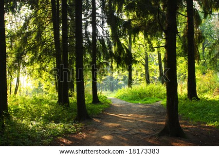 Green forest. Old trees. Sun weather. Day - stock photo