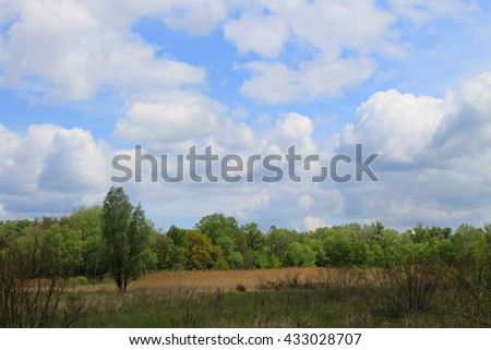 Green forest on spring - stock photo