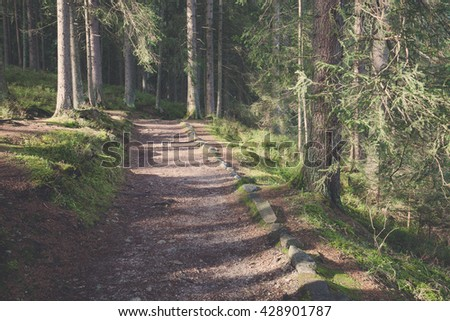 Green forest path at summer morning - stock photo