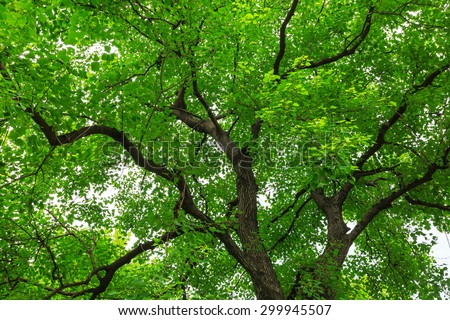green forest trees backgrounds - stock photo