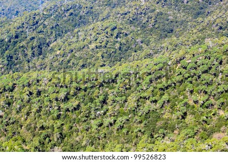 Green forest, view from the high point - stock photo