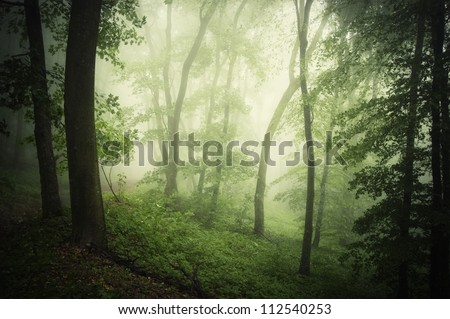 green forest with bright light - stock photo