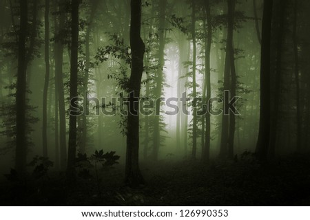 green forest with fog in morning - stock photo