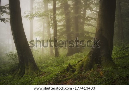 green forest with moss on tree roots - stock photo