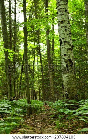 Green forest with path, vertical - stock photo