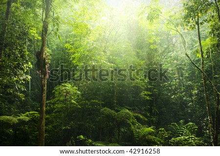Green forest with ray of light. - stock photo