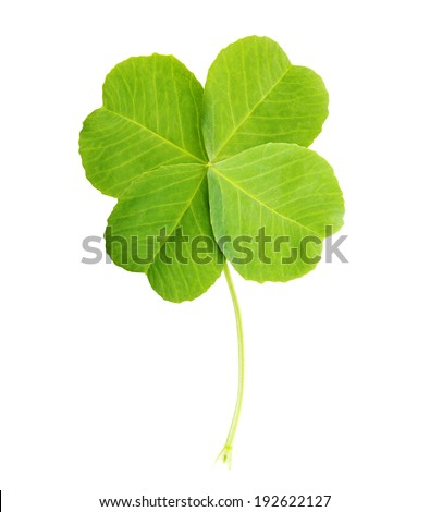 Green four-leaf clover leaf isolated on white background. - stock photo