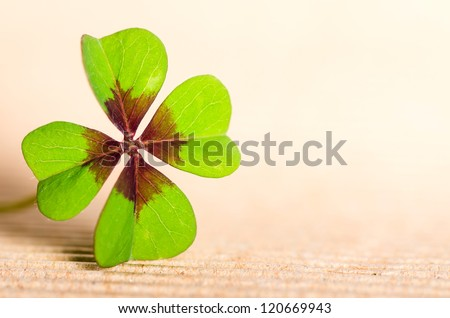 green four-leaved cloverleaf with copy space - stock photo