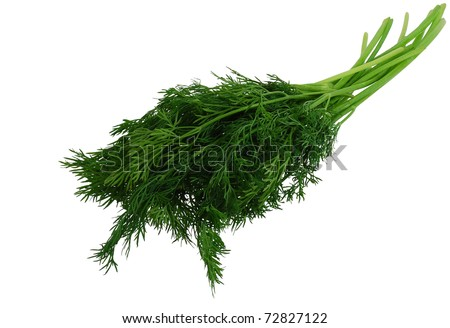 Green fresh dill isolated on white background - stock photo