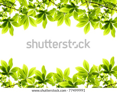 green fresh leaves frame - stock photo