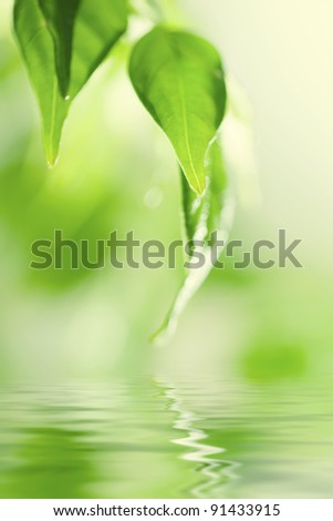 Green fresh leaves over water - stock photo