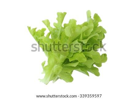Green fresh lettuce isolated on white background - stock photo
