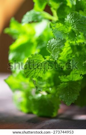 Green fresh melissa leaves close up - stock photo