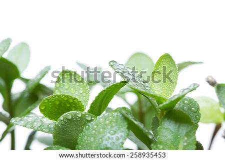 Green fresh plant leafs - stock photo