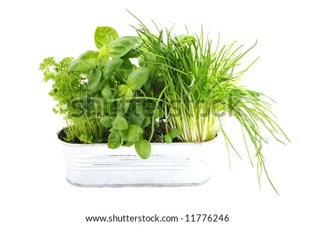 green fresh spice herbs spice potherb - stock photo