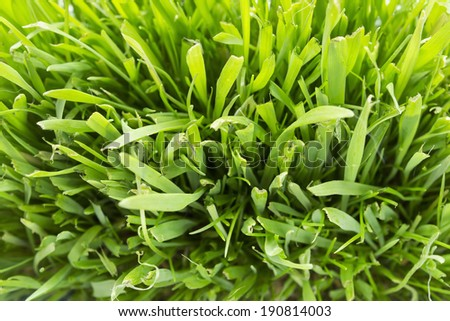 Green fresh sunny grass closeup as a background - stock photo