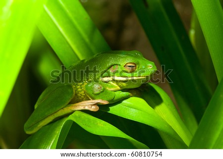 green frog - stock photo