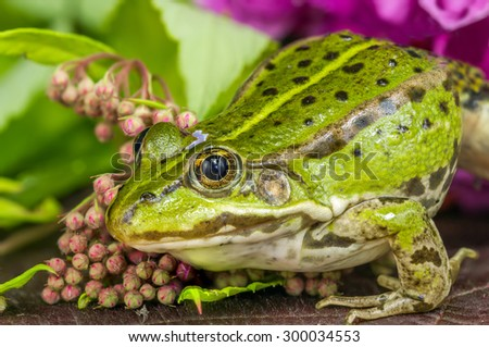 Green Frog Branch - stock photo