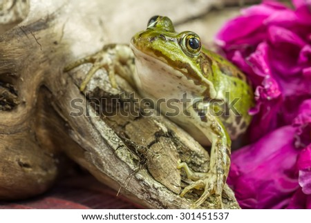 Green frog on a tree branch - stock photo