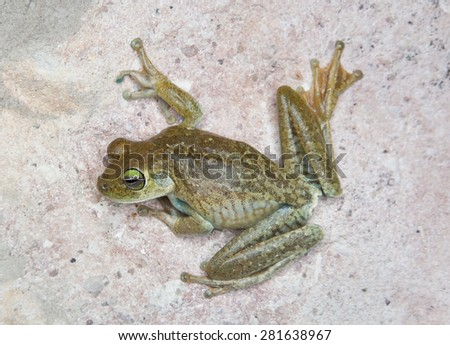 Green frog on a wall - stock photo