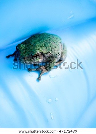 Green Frog on Blue Background - stock photo