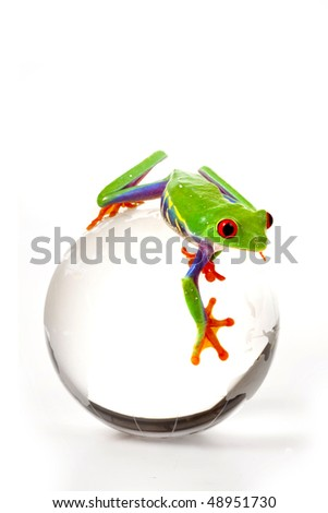 Green Frog on Globe - stock photo