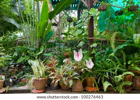 green garden home decoration - stock photo