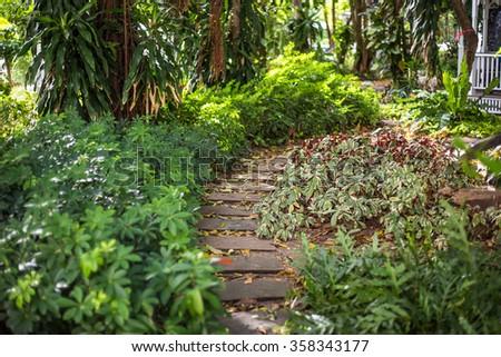 Green garden path - stock photo