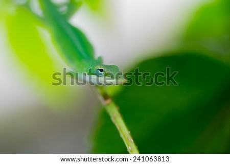 Green gecko camouflaged on a garden branch - stock photo